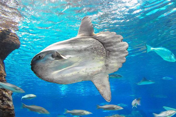 Топ-10 самых больших рыб в мире
