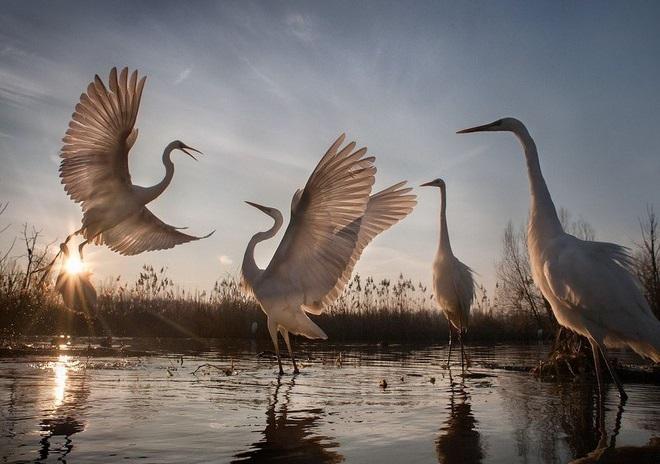 Лучшие фото дикой природы 2016: рейтинг National Geographic
