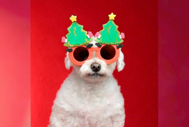Смешные животные в новогодних нарядах: 40 фото