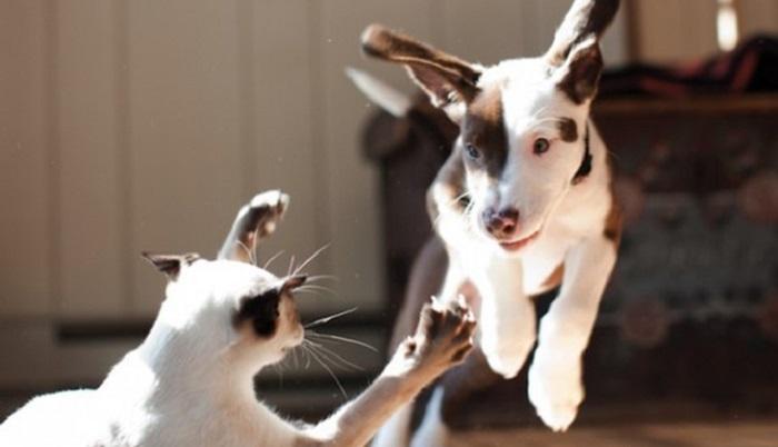 Коты и собаки, 35 забавных фото