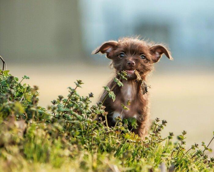 50 забавных и милых фотографий щенков, в которых невозможно не влюбиться