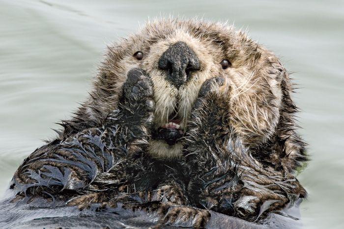 50 фото забавных животных