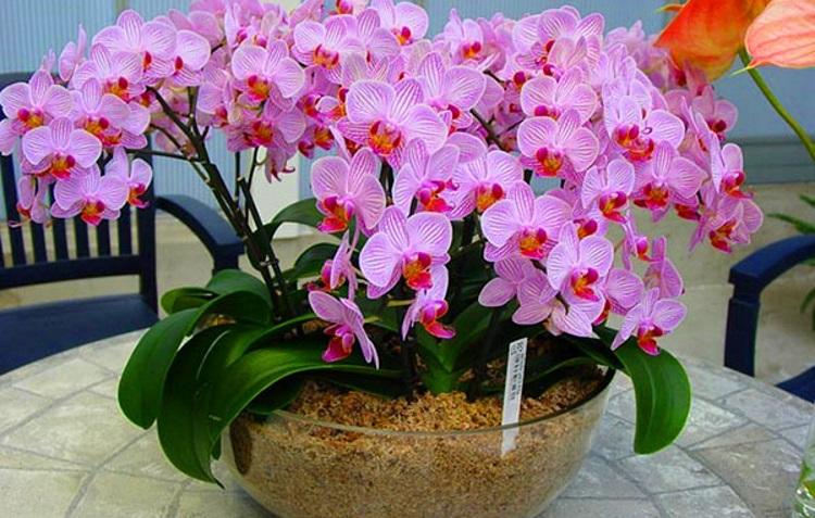 15 самых красивых видов орхидей, 30 фото
