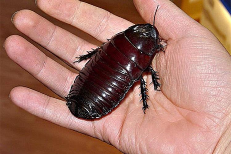 25 ужасающих фото самых больших насекомых, живущих на нашей планете