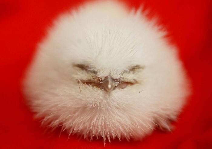 30 невероятно смешных и милых птенцов
