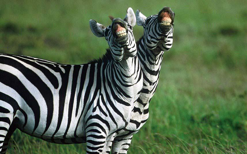 Самые впечатляющие фото дикой природы
