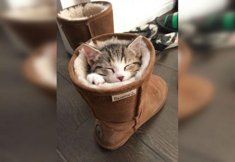 Спящие котики: такой милоты вы еще не видели