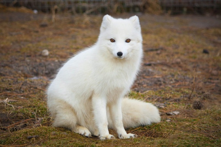 Самые красивые животные планеты: 30 фото